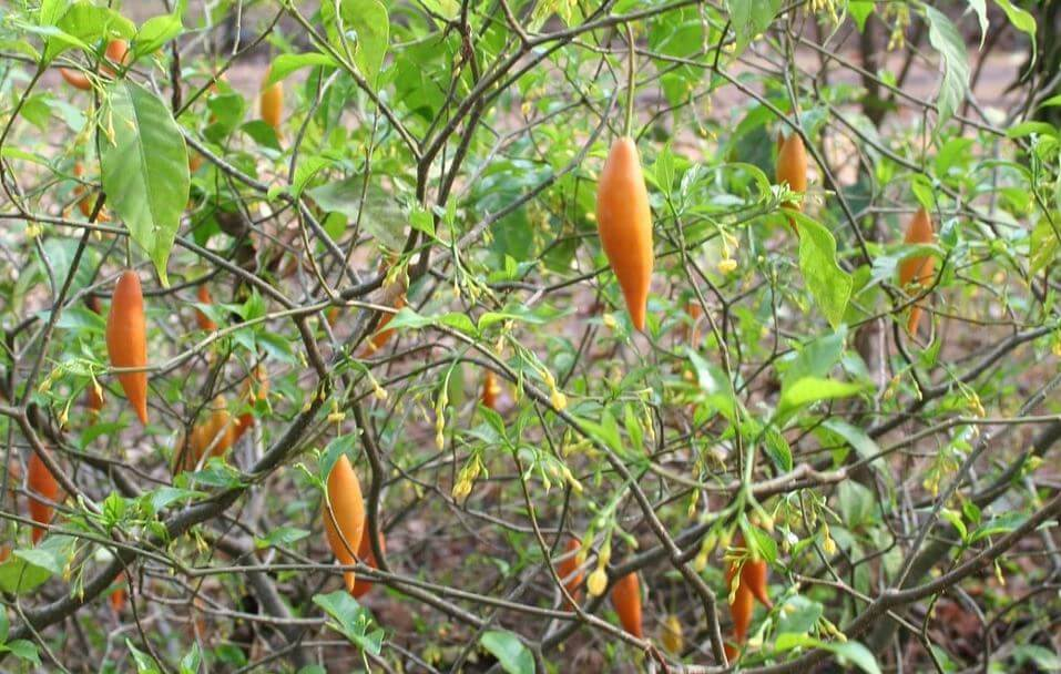 ibogaine treatment in mexico